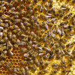 Many bees on honeycomb — Foto Stock