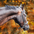 Horse in the autumn park — Stock Photo