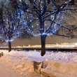 Trees in christmas illumination — Stockfoto #12530007