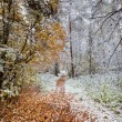 First snow — Stock Photo