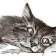 Lying cat drawing portrait — Stock Photo