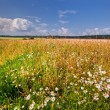 Stock Photo: Summer landscape with rye field