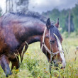 Chestnut horse in a field — Stock Photo