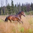 Chestnut horse in a field — Stock Photo #31556839