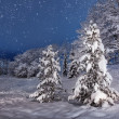 Winter evening with spruces — Stock Photo #35903247