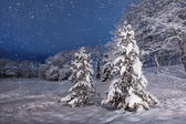 Winter evening with spruces — Stock Photo