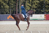 Medalist Marina Aframeeva horse named Vosk — Photo