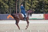 Medalist Marina Aframeeva horse named Vosk — 图库照片