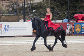 "Demonstration performance - Tango on the Friesian horse of HBF ""Kartsevo"" — Stock Photo"