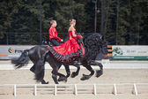 "Demonstration performance - Tango on the Friesian horse of HBF ""Kartsevo"" — Stok fotoğraf"