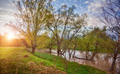 River in morning light — Stock Photo