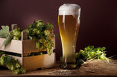 Still life with beer and hops. — Stock Photo