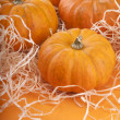 Pumpkin background - Stock Photo