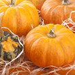 Pumpkin background — Stock Photo #13781126