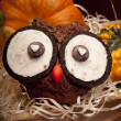 Owl muffins — Stock Photo