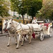 Horse carriage on a street — Stock Photo