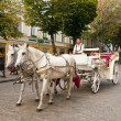 Horse carriage on a street - Stock Photo