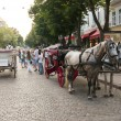 Horse carriage on a street - 