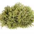 Green moss - Stock Photo