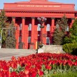Red tulips near the Taras Shevchenko National University, Kiev, Ukraine - 图库照片