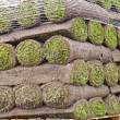 Rolls of new sod - 图库照片