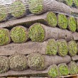 Rolls of new sod - Stockfoto