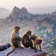 Monkeys near the Hanuman Temple — Stock Photo