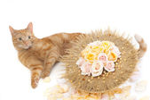Red Cat with flower bouquet — Stock Photo