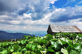 Carpathian mountains landscape — Stock Photo