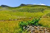 Montagna dei carpazi — Foto Stock