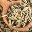 Fennel seeds — Stock Photo #30760453