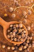 Heap coriander seeds — Stock Photo