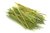 Bundle of Lemon grass (Cymbopogon) — Stok fotoğraf