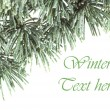 Christmas cedar background — Stock Photo