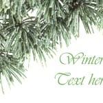Christmas cedar background — Stock Photo