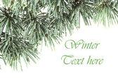 Christmas cedar background — Foto de Stock