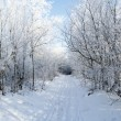 Road in the winter forest — Stock Photo