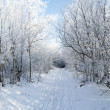 Road in the winter forest — Stock Photo #36166805