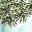 Fir-tree against blue sky — Stockfoto
