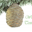 Christmas fir-tree with big cedar cone background — Stok fotoğraf