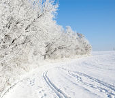 Frozen trees in the winter field — Foto Stock