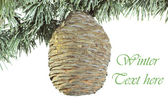 Christmas fir-tree with big cedar cone background — Stock Photo