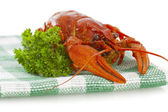 One boiled crawfish with parsley on the checkered serviette — Stock Photo