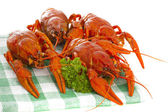Boiled crawfish with parsley on the checkered serviette — Stock Photo