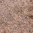Close-up dried cumin seeds — Stock Photo
