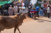 Stray cow walks on the marketplace — ストック写真