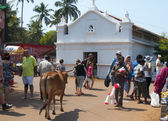 Stray cow walks through the marketplace — Stock Photo