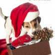Jack Russell Terrier puppy in Santa hat — Stock Photo #36919443