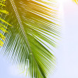 Palm leaf on blue sky — Stock Photo