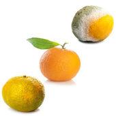 Three stages of tangerine. — Stock Photo
